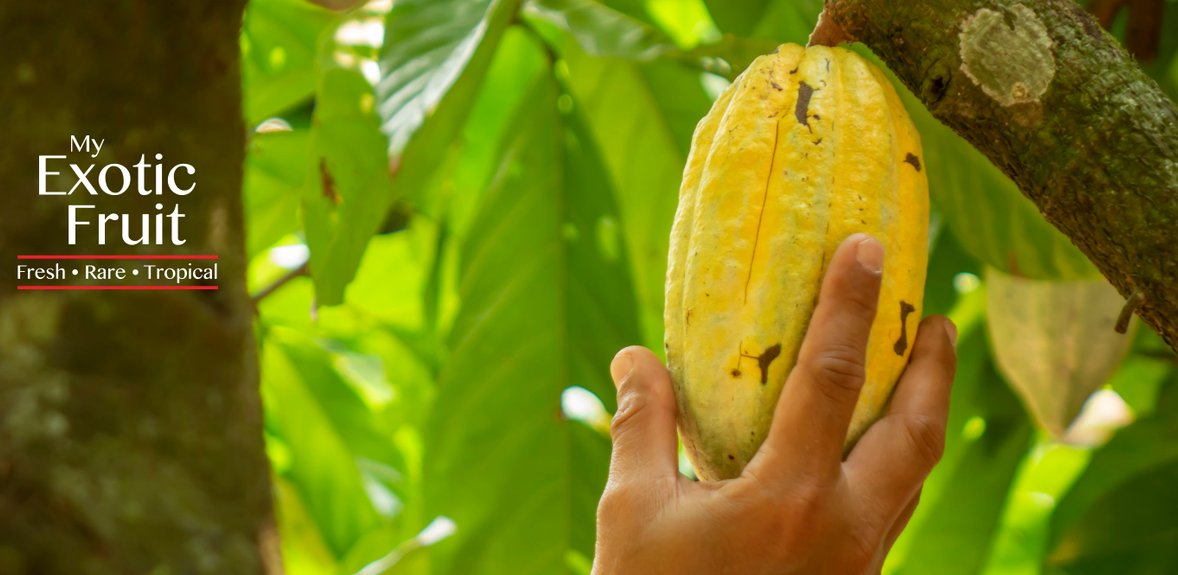 My Exotic Fruit – The No 1 website for all your tropical fruit!
