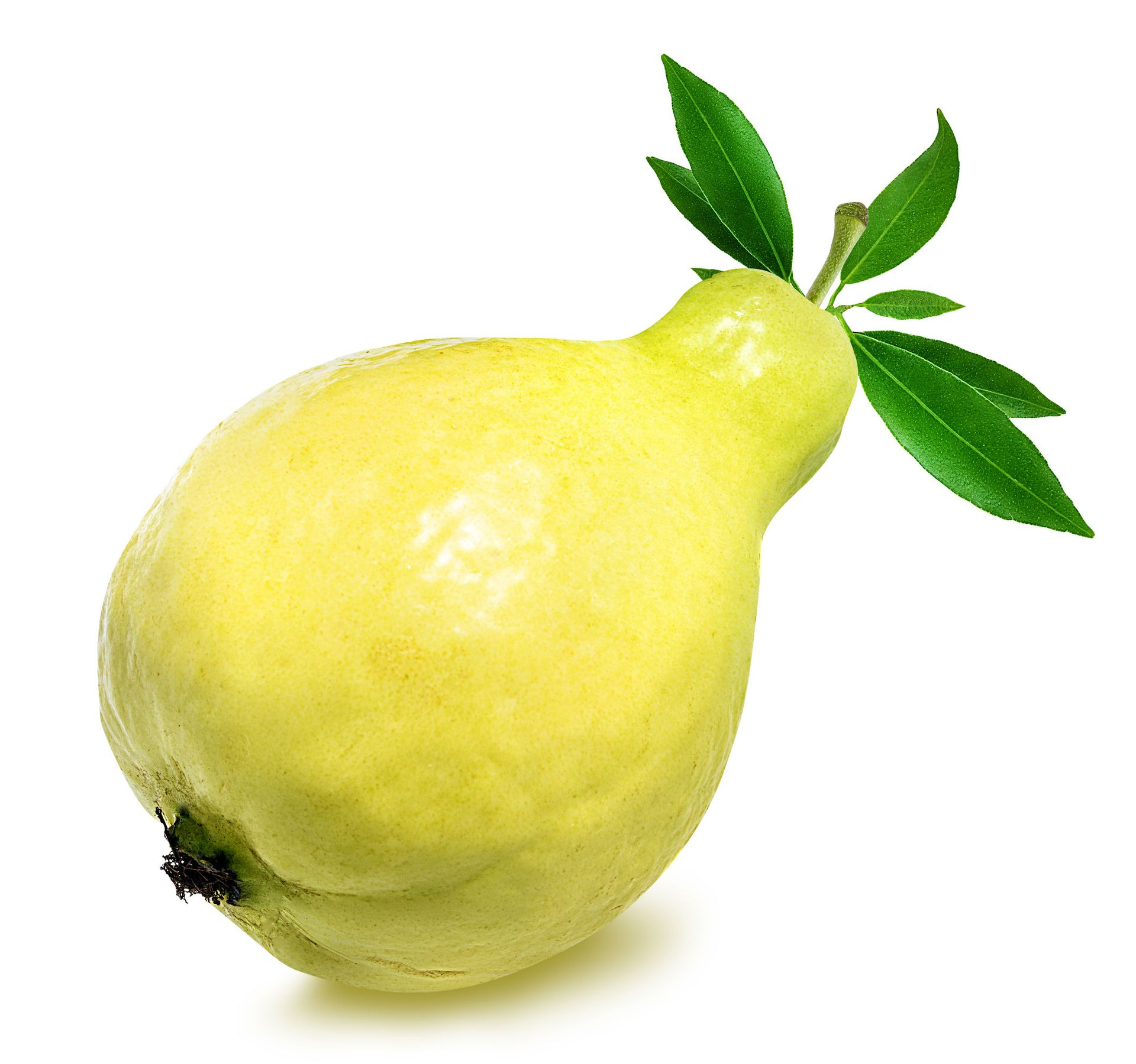 Guava White Flesh Usually From Egypt My Exotic Fruit